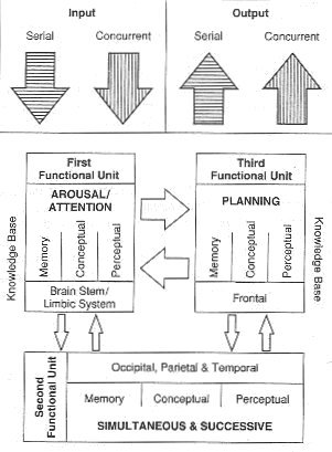 Planning, attention, simultaneous, and successive (PASS) model